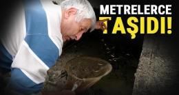 Edirne'de kuruyan kanaldaki balıkları pet şişelerle nehre taşıyıp, ölümden kurtardı
